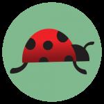 Lady bug in green