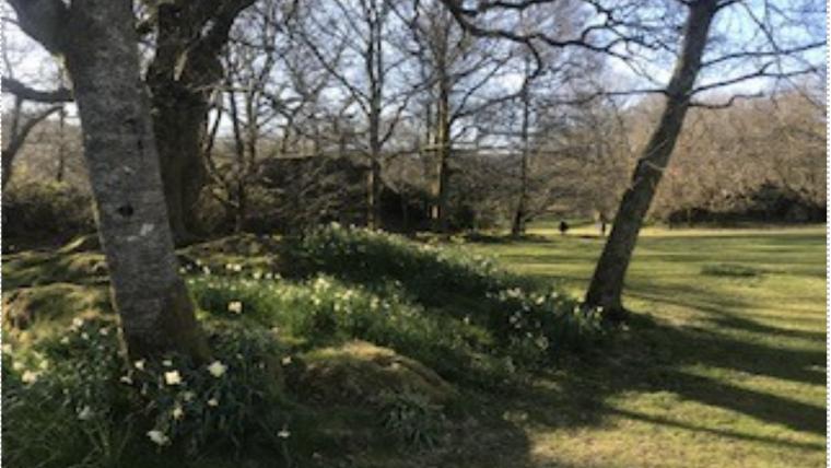 trees and shade